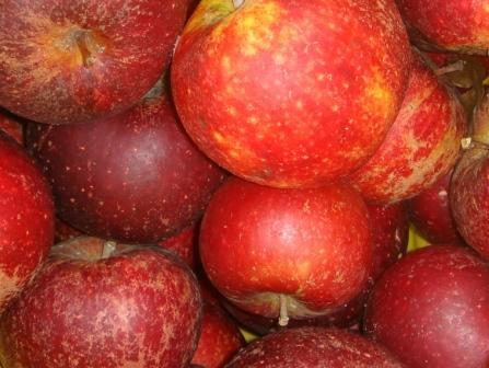 Man kan bl.a. få økologiske æbler på Farmers Market