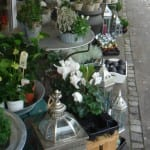 Blomster i Sorø