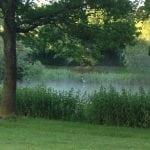 Søen damper