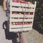 Æblerne er på vej