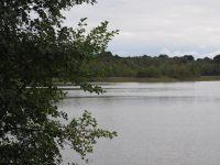 Bromme Lillesø omkranset af skov og rørskov set fra den åbne eng ved Anagervej. Foto: DN Sorø